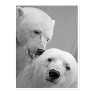 Eisbär-Nagen Postkarte