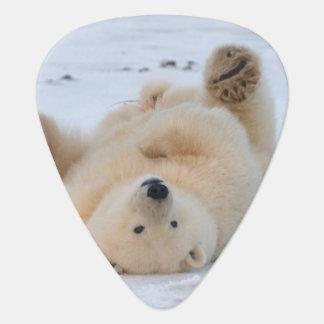 Eisbär, Ursus maritimus, Junges, das 3 rollt Plektron