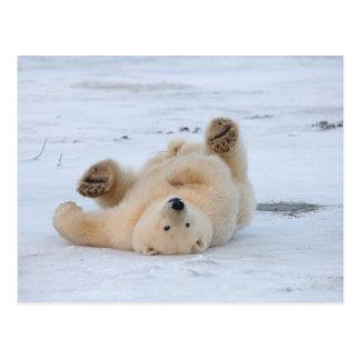 Eisbär Ursus maritimus Junges das 3 rollt Postkarte