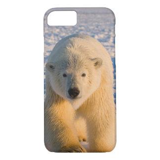 Eisbär, Ursus maritimus, polar betreffen Eis iPhone 8/7 Hülle