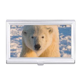 Eisbär, Ursus maritimus, polar betreffen Eis Visitenkarten Etui