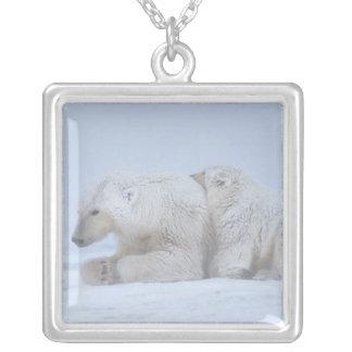 Eisbär, Ursus maritimus, Sau mit Jungem Versilberte Kette