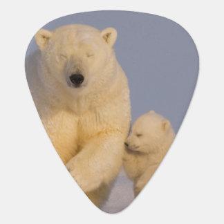 Eisbär, Ursus maritimus, Sau mit neugeborenen 3 Plektrum