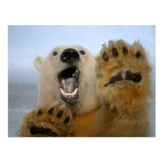 Eisbär, Ursus maritimus, schaut neugierig in 2 Postkarte