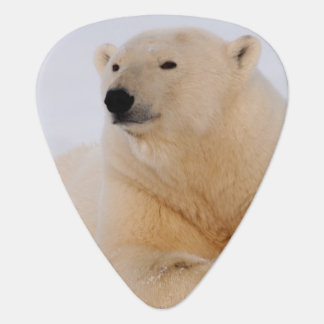 Eisbär, Ursus maritimus, stehend auf still Plektron