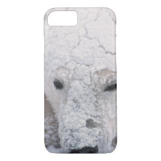 Eisbär, Urus Maritimus, Arktis, Churchill, iPhone 8/7 Hülle