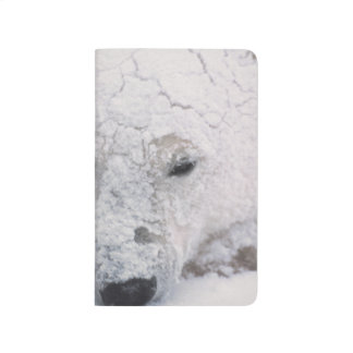 Eisbär, Urus Maritimus, Arktis, Churchill, Taschennotizbuch