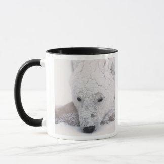 Eisbär, Urus Maritimus, Arktis, Churchill, Tasse