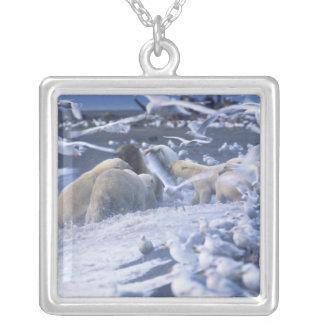 EisbärenUrsus maritimus), erfassen herum Versilberte Kette