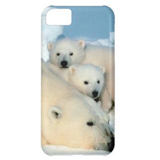 Eisbärjunges 1 iPhone 5C hülle