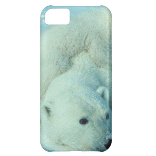 Eisbärjunges und Mamma - 2 iPhone 5C Hülle