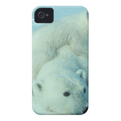 Eisbärjunges und Mamma - 2 iPhone 4 Hüllen