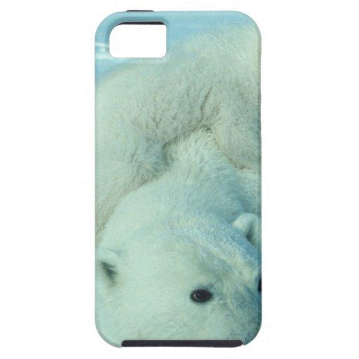 Eisbärjunges und Mamma - 2 iPhone 5 Case