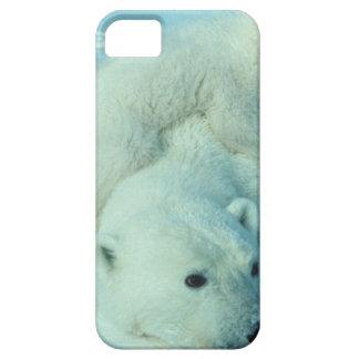Eisbärjunges und Mamma - 2 iPhone 5 Hülle