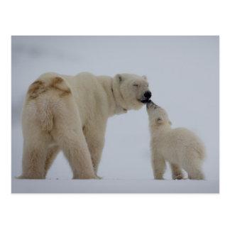 Eisbärmutter mit Jungem Postkarte