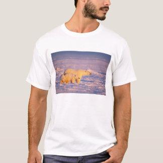 Eisbärsau mit Frühling wirft auf dem gefrorenen T-Shirt