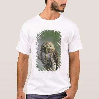 Eisenhaltige Pygmäe-Eule, Glaucidium brasilianum, T-Shirt