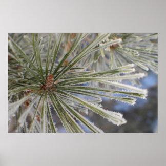 Eisige Kiefer in Winter fantasiereichen Bildern Poster