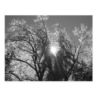 Eisiger Baum Postkarte