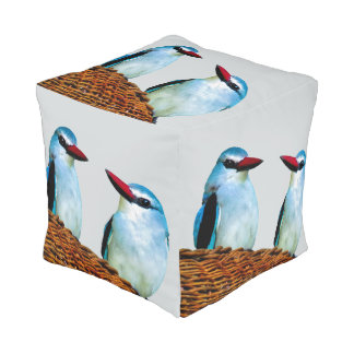Eisvogel-Vögel Südafrika Hocker