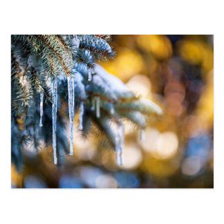 Eiszapfen auf Tannenbaum im Winter Postkarte