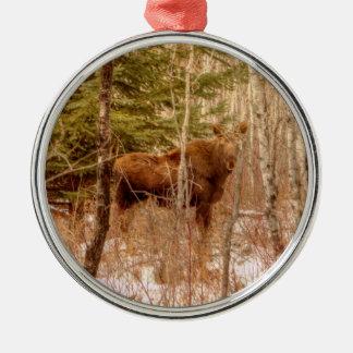 Elch-Kalb Silbernes Ornament