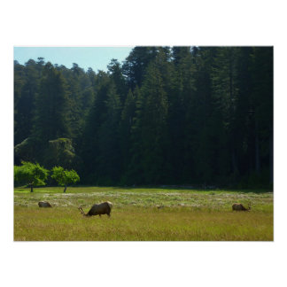 Elch-Wiese am Rotholz-Nationalpark Poster