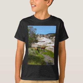 Elche bei Mammoth Hot Springs T-Shirt