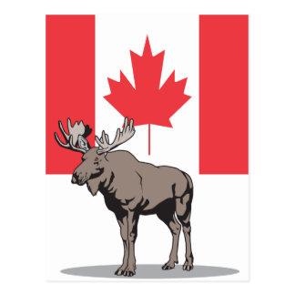 Elche Kanada Postkarte