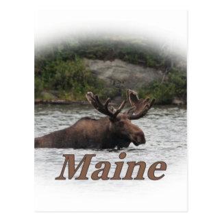 Elche Maines Stier Postkarte