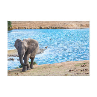Elefant auf dem See Leinwanddruck