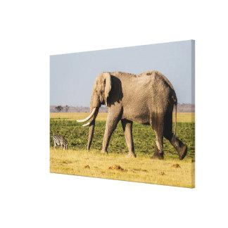 Elefant, der durch ein Waterhole geht Leinwanddruck