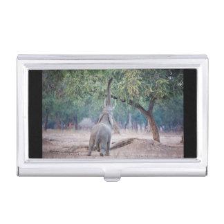 Elefant, der für Akazienbaum erreicht Visitenkarten Dose