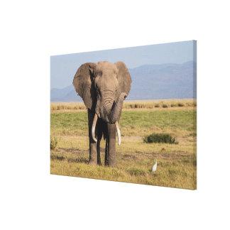 Elefant, der seinen Stamm wellenartig bewegt Leinwanddruck