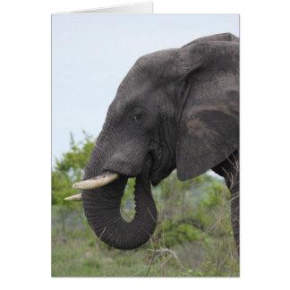 Elefant-Essen Karte