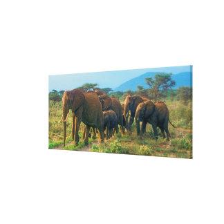 Elefant-Herden-Gehen Leinwanddruck