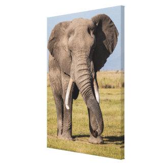 Elefant in einer aggressiven Pose Leinwanddruck