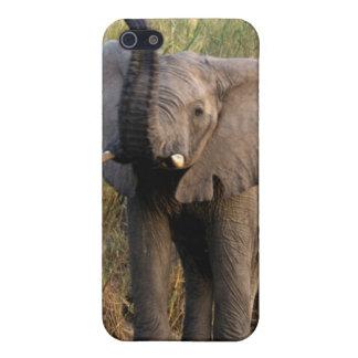 Elefant iPhone Fall Schutzhülle Fürs iPhone 5