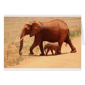 Elefant-Mama und CUB Karte