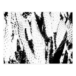 Elefant-Ohr-Kaktus in Schwarzweiss Postkarte