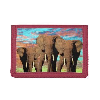 Elefant-Opalsonnenaufgang,