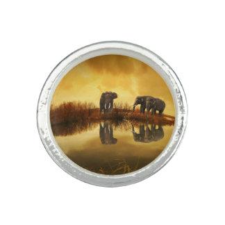 Elefant Foto Ringe