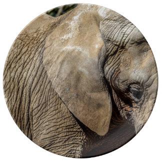 Elefant-Platte Porzellanteller