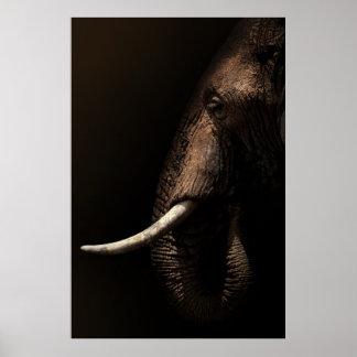 Elefant-Profil-Plakat Poster