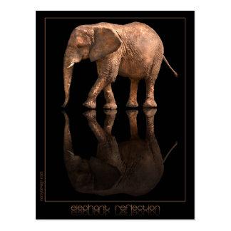 Elefant-Reflexions-Postkarte Postkarte