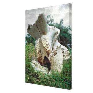 Elefant-Schädel Leinwanddruck
