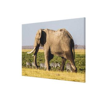 Elefant und Zebras bei Waterhole Leinwanddruck