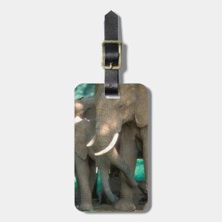 Elefanten, die Junge schützen Gepäckanhänger