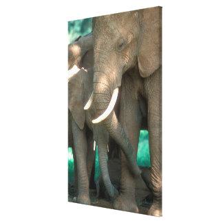 Elefanten, die Junge schützen Leinwanddruck
