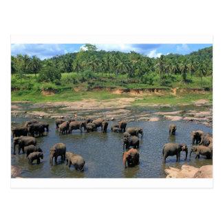 Elefanten Sri Lanka Postkarte